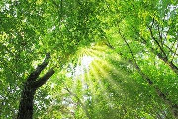 【社長コラム】葬儀後の心配を解決するための樹木葬開発