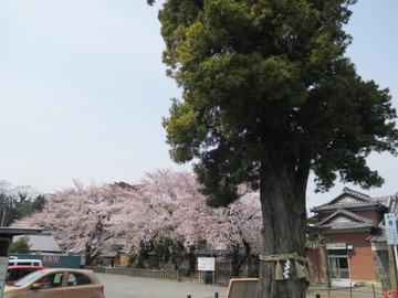 【社長コラム】花木、咲き盛んな 春の日